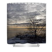 Early Morning Tree Silhouette On Silver Sky Shower Curtain