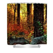 Early Morning Walk Shower Curtain