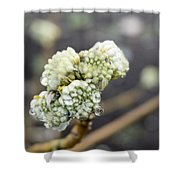 Early Spring 2 Shower Curtain