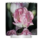 Early Spring 4 Of 5 Shower Curtain