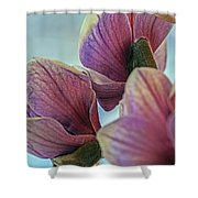 Early Spring Beauty Shower Curtain