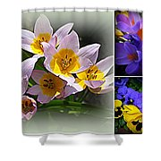 Early Spring Blossoms Shower Curtain