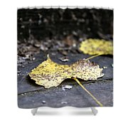 Early Start To Autumn Shower Curtain