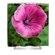 Early Summer Blooms Impressions - Bright Pink Malva - Vertical View Shower Curtain