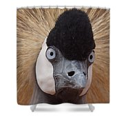 East African Crowned Crane 6 Shower Curtain