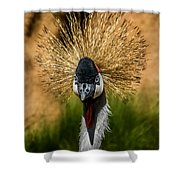 East African Crowned Crane Square Format Shower Curtain