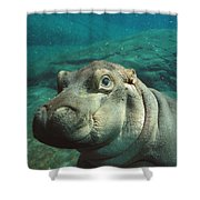 East African River Hippopotamus Baby Shower Curtain