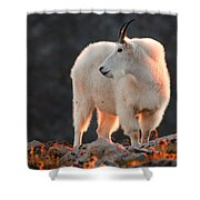 East Of Evening Shower Curtain