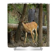 East Texas Whitetail  Shower Curtain