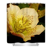 Easter Bloom 2014 Shower Curtain