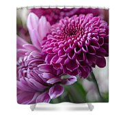Easter Bouquet Flowers Mums And Dahlia Shower Curtain
