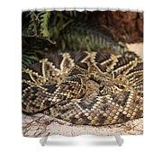 Easter Diamond Back Rattlesnake Shower Curtain