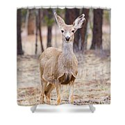 Easter Does Shower Curtain