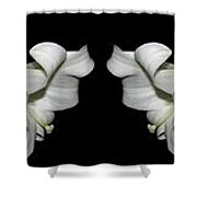 Easter Lilies Panorama Shower Curtain