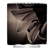 Easter Lilly Shower Curtain
