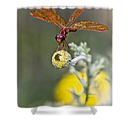 Eastern Amberwing Dragonfly Shower Curtain