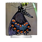 Eastern Black Swallowtail Shower Curtain