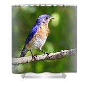 Eastern Bluebird - After His Bath Shower Curtain