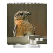 Eastern Bluebird Eye To Eye Shower Curtain