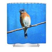 Eastern Bluebird II Shower Curtain