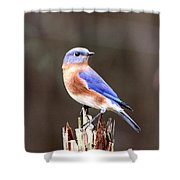 Eastern Bluebird - The Old Fence Post Shower Curtain