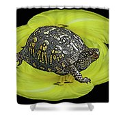 Eastern Box Turtle On Yellow Lily Shower Curtain