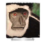 Eastern Colobus Monkey Shower Curtain