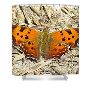 Eastern Comma Shower Curtain