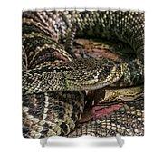 Eastern Diamondback Rattlesnake 1 Shower Curtain