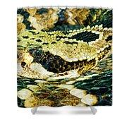 Eastern Diamondback Rattlesnake Shower Curtain