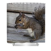 Eastern Gray Squirrel-4 Shower Curtain