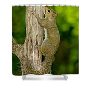 Eastern Gray Squirrel Shower Curtain