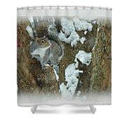 Eastern Gray Squirrel - Sciurus Carolinensis Shower Curtain