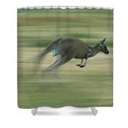 Eastern Grey Kangaroo Female Hopping Shower Curtain