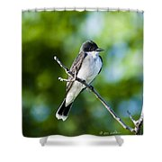 Eastern Kindbird  Shower Curtain