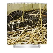 Eastern Massasauga Rattlesnake Sistrurus Catenatus Poster Look Shower Curtain