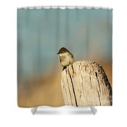 Eastern Phoebe Shower Curtain