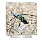 Eastern Pondhawk Shower Curtain