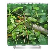 Eastern Pondhawk Female Dragonfly - Erythemis Simplicicollis - On Pine Needles Shower Curtain