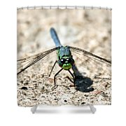 Eastern Pondhawk Front Shower Curtain