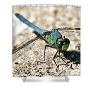 Eastern Pondhawk Side Shower Curtain