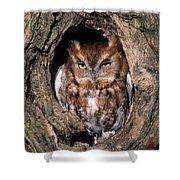 Eastern Screech Owl - Fs000810 Shower Curtain