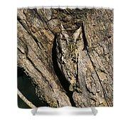 Eastern Screech-owl Otis Asio Wild Texas Shower Curtain