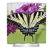 Eastern Swallowtail  Shower Curtain