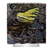 Eastern Swallowtail Shower Curtain