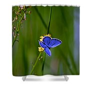Eastern Tail Blue Butterfly Shower Curtain