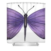 Eastern Tailed Blue Butterfly Shower Curtain by Anonymous