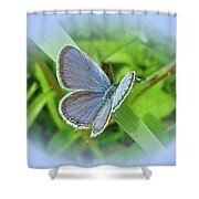 Eastern-tailed Blue Butterfly - Cupido Comyntas Shower Curtain