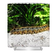 Eastern Tent Caterpillar Shower Curtain