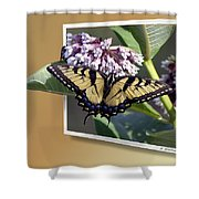 Eastern Tiger Swallow Tail Shower Curtain